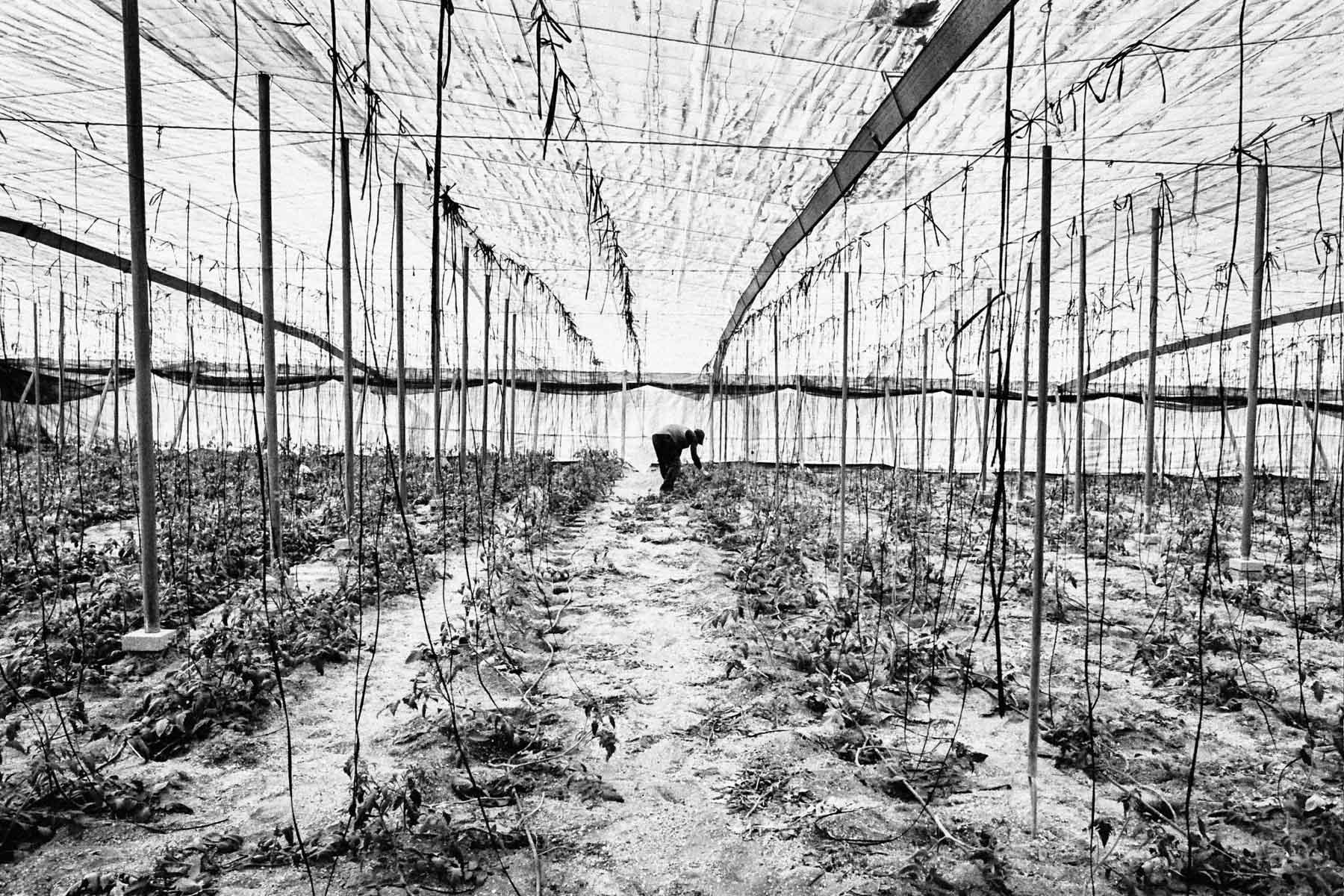 Jules_Toulet_Le sang de nos tomates-12